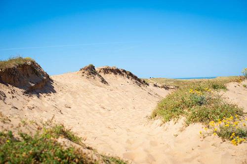 Un camping avec un accès direct à la plage sans passer par des routes